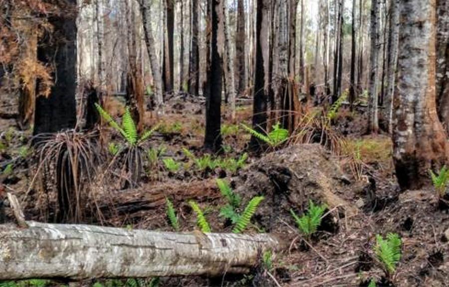 Slattery appointed Quantity Surveyor for Victorian Bushfire Clean-Up Program.